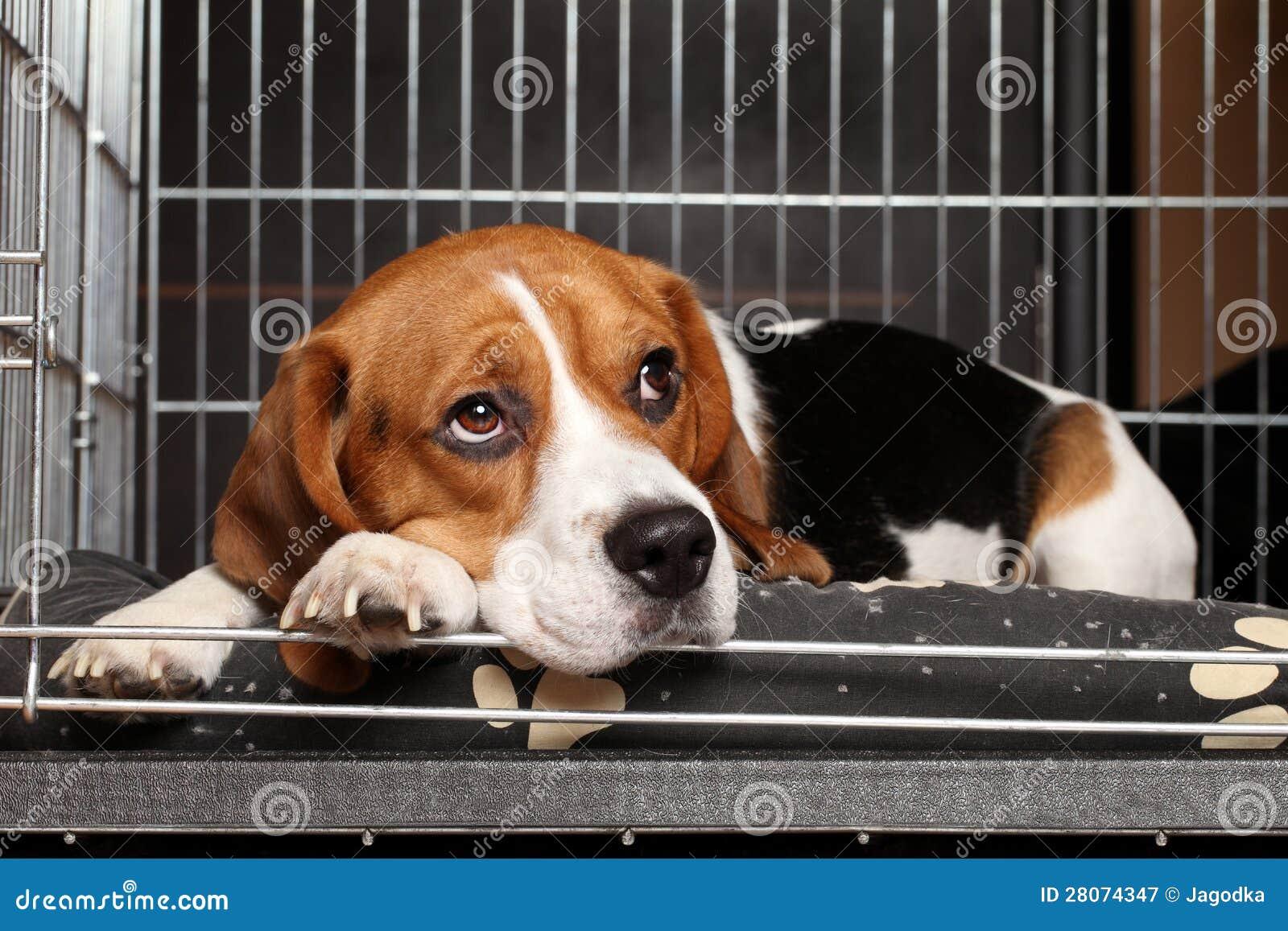 Hond in kooi