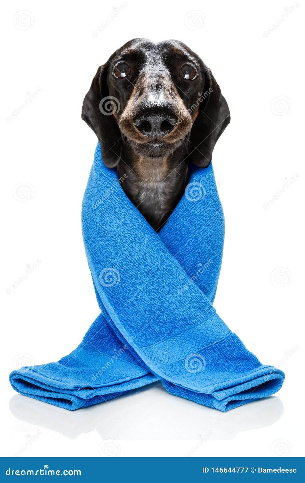 Hond met een schoonheidsmasker