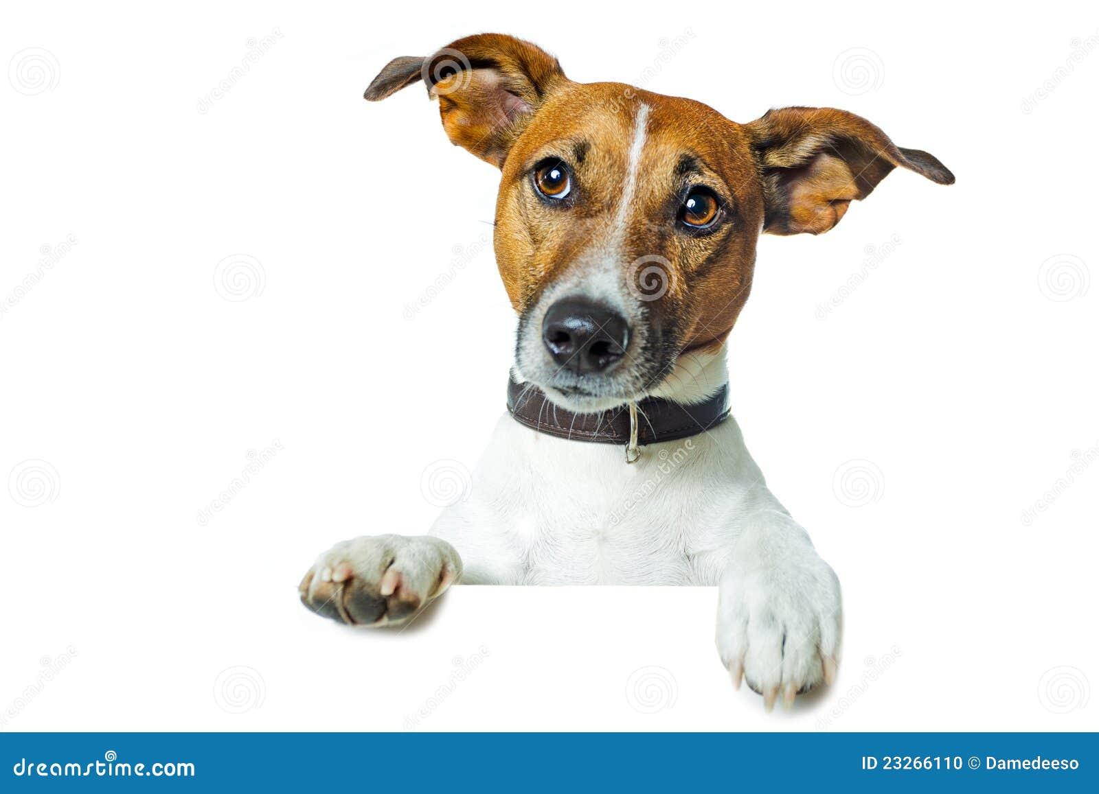 Hond met een witte banner
