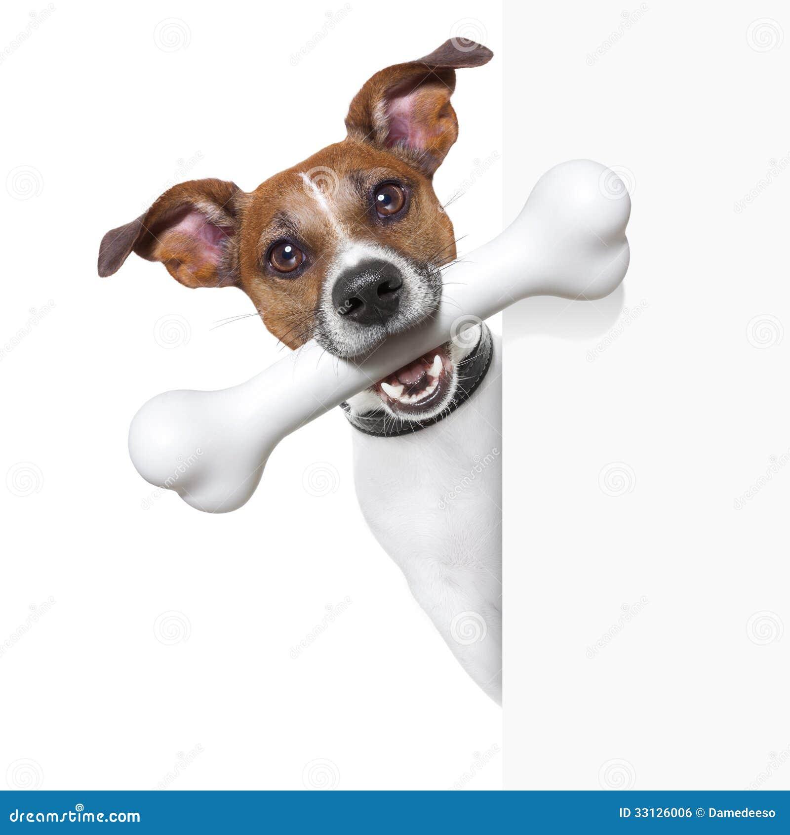Hond met groot been