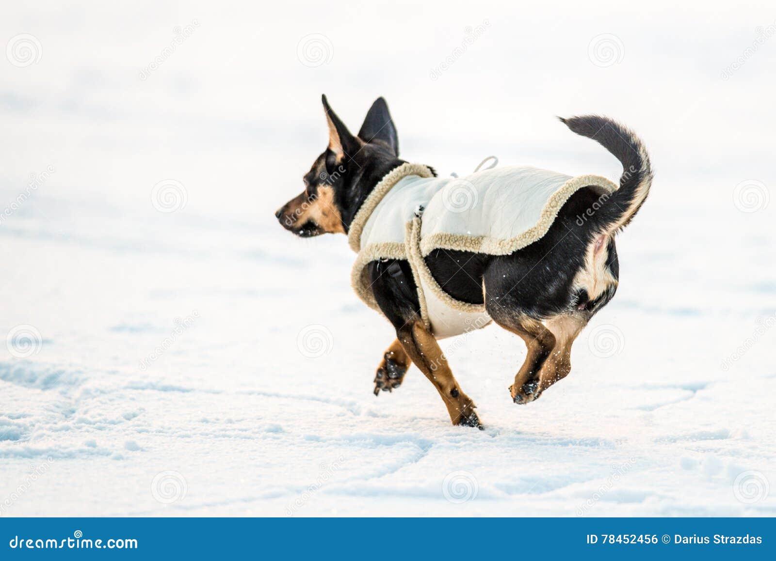 Hond met kleren op sneeuw in werking die worden gesteld die