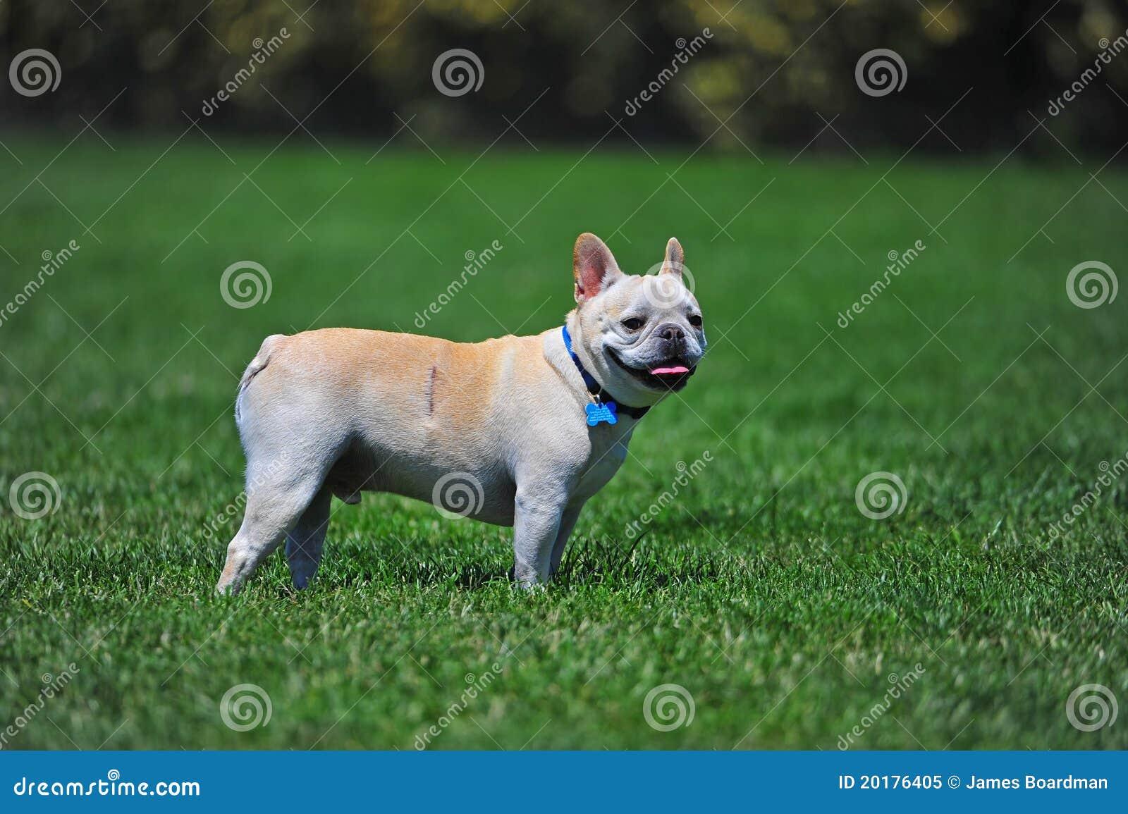 Hond met litteken