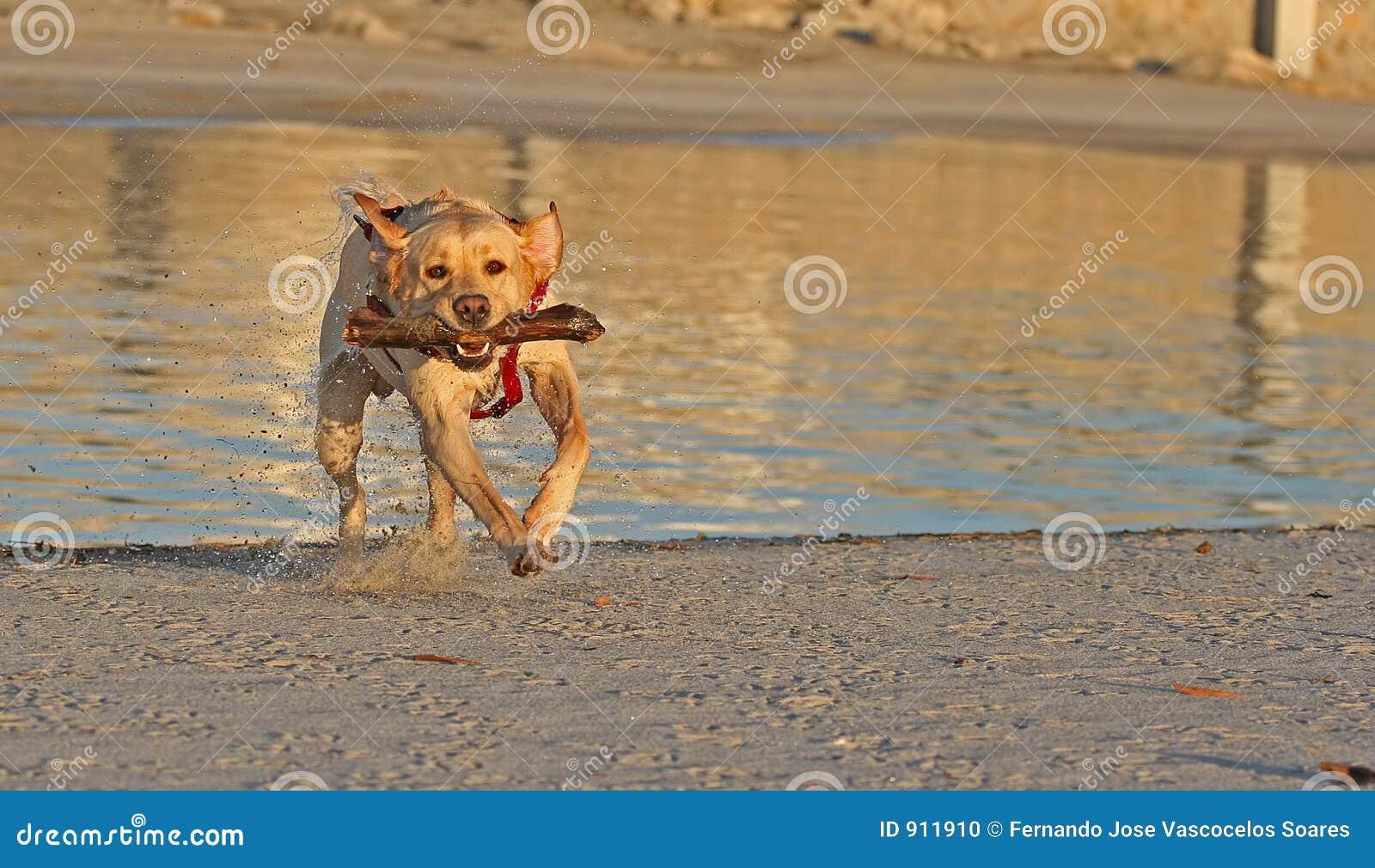 Hond met stok