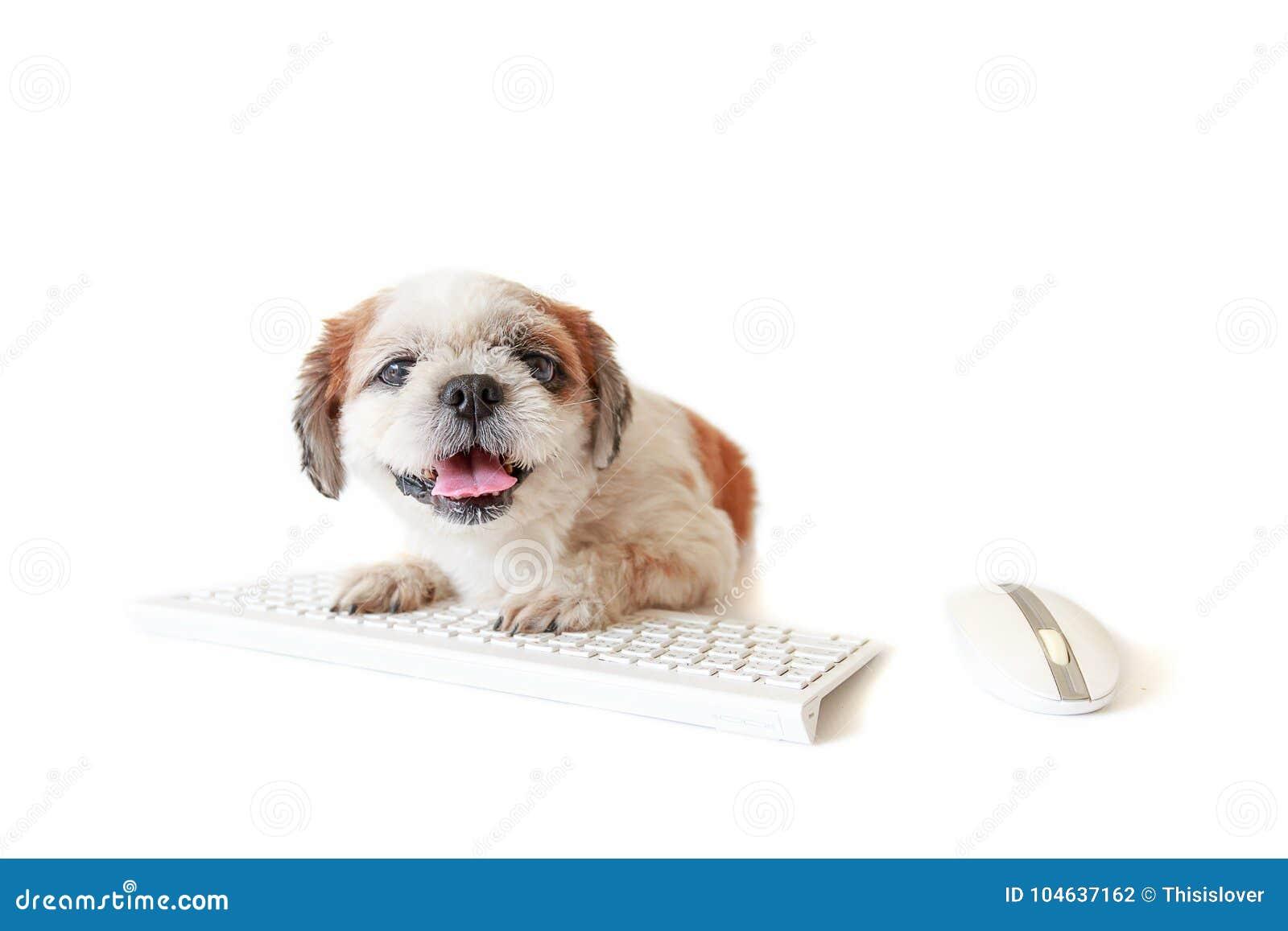 Download Hond Met Toetsenbord En Muis Stock Foto - Afbeelding bestaande uit computer, ruimte: 104637162