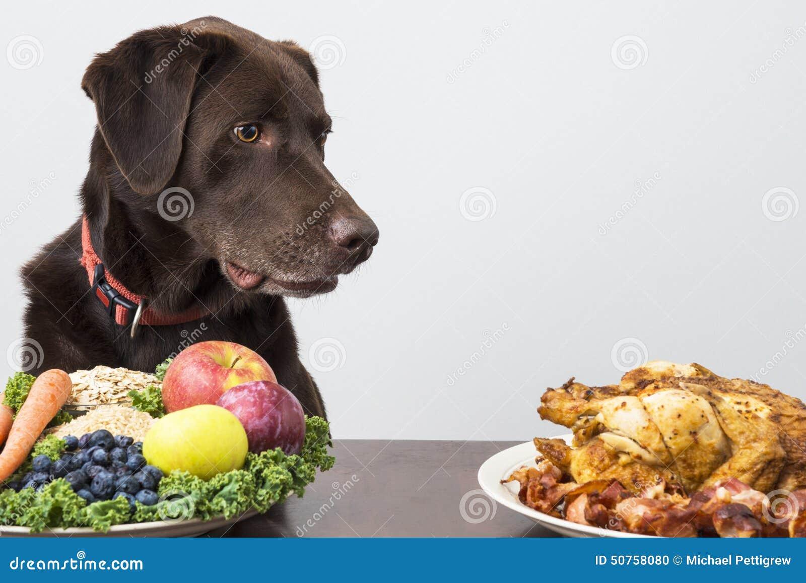Hond met veganist en vleesvoedsel