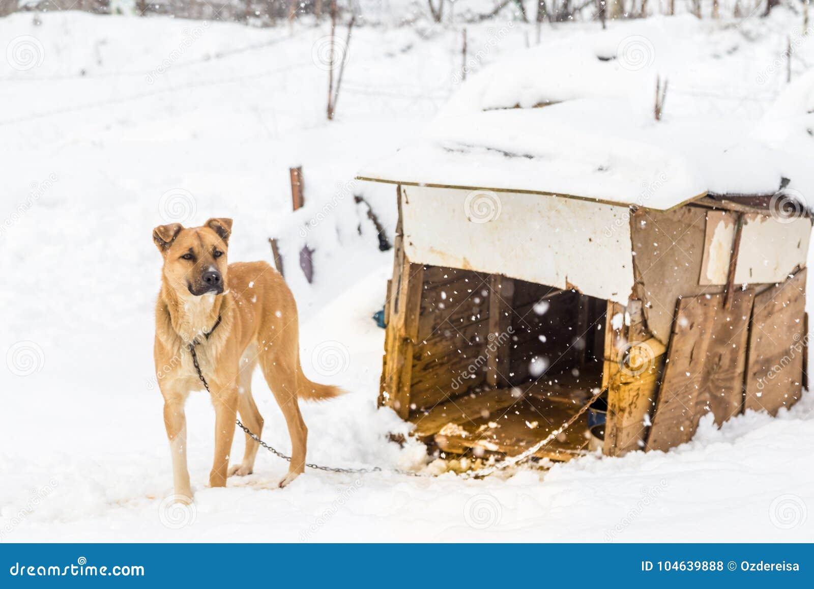 Download Hond Met Zijn Hondehok Op Een Sneeuwdag Stock Foto - Afbeelding bestaande uit winter, huis: 104639888