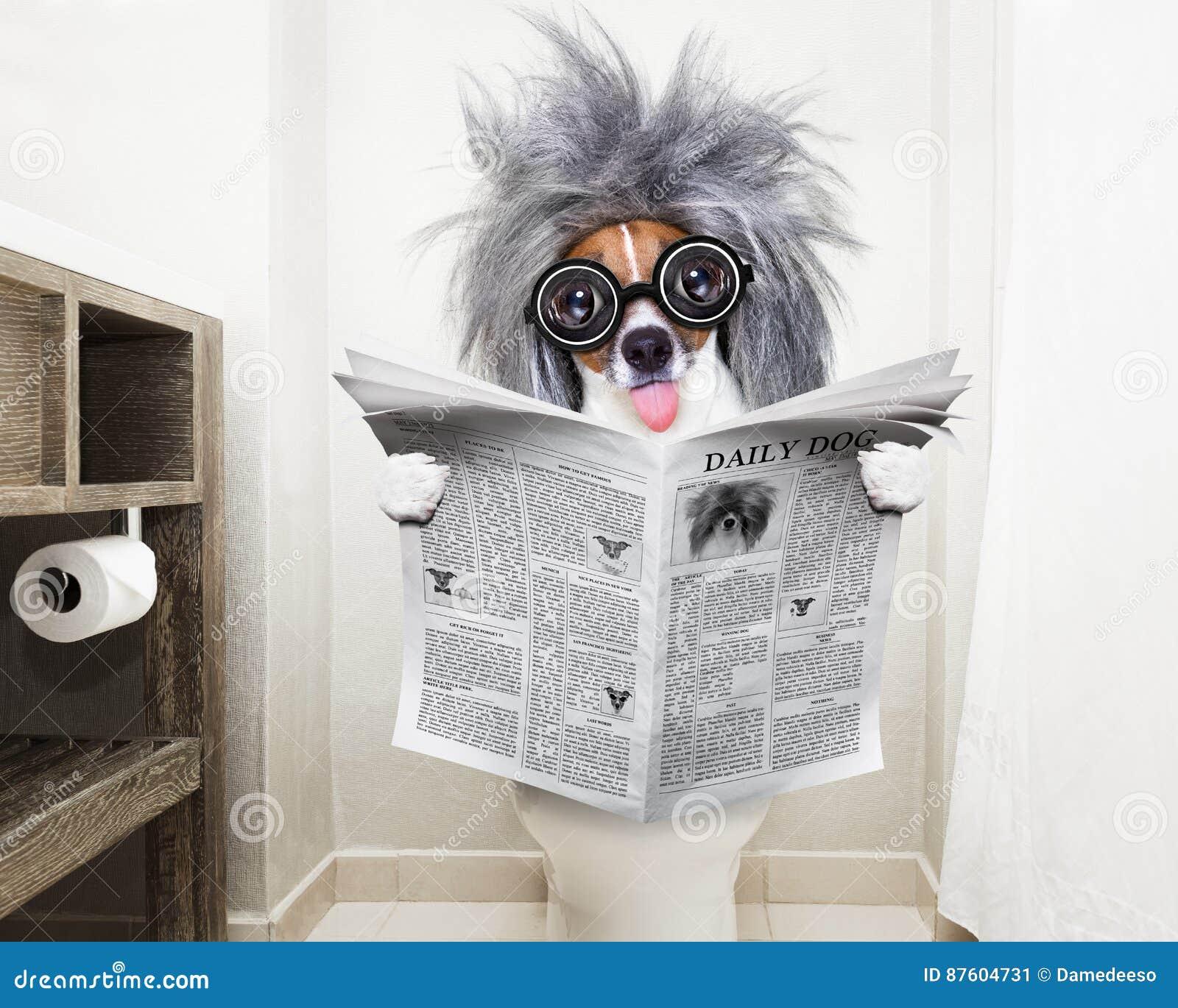 Hond op de lezingskrant van de toiletzetel