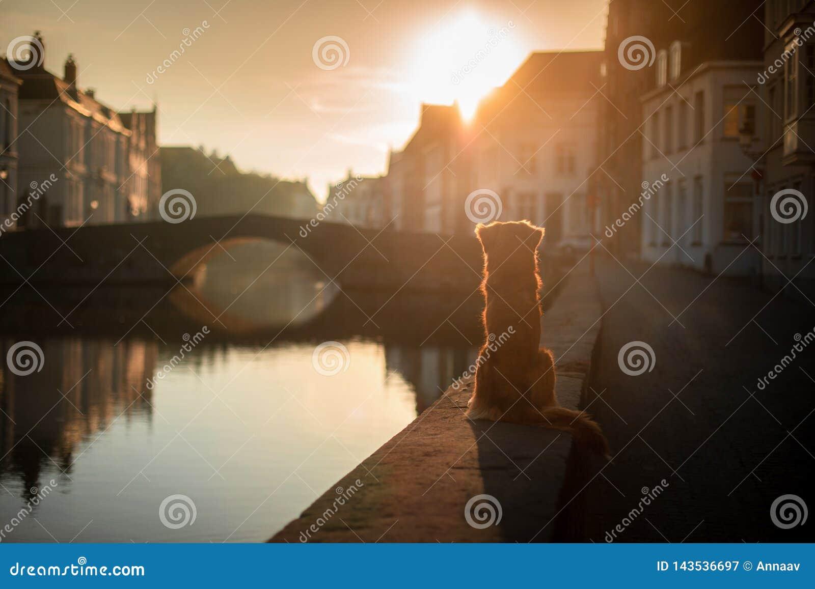 Hond op de waterkant bij zonsopgang Huisdier op aard Nova Scotia Duck Tolling Retriever, Toller
