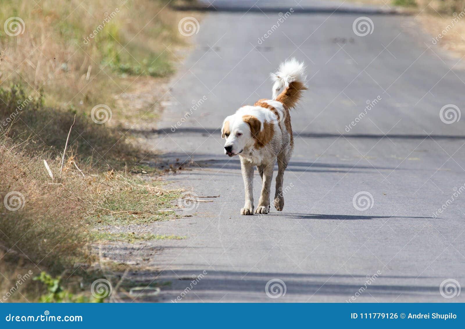 Hond op de weg in aard
