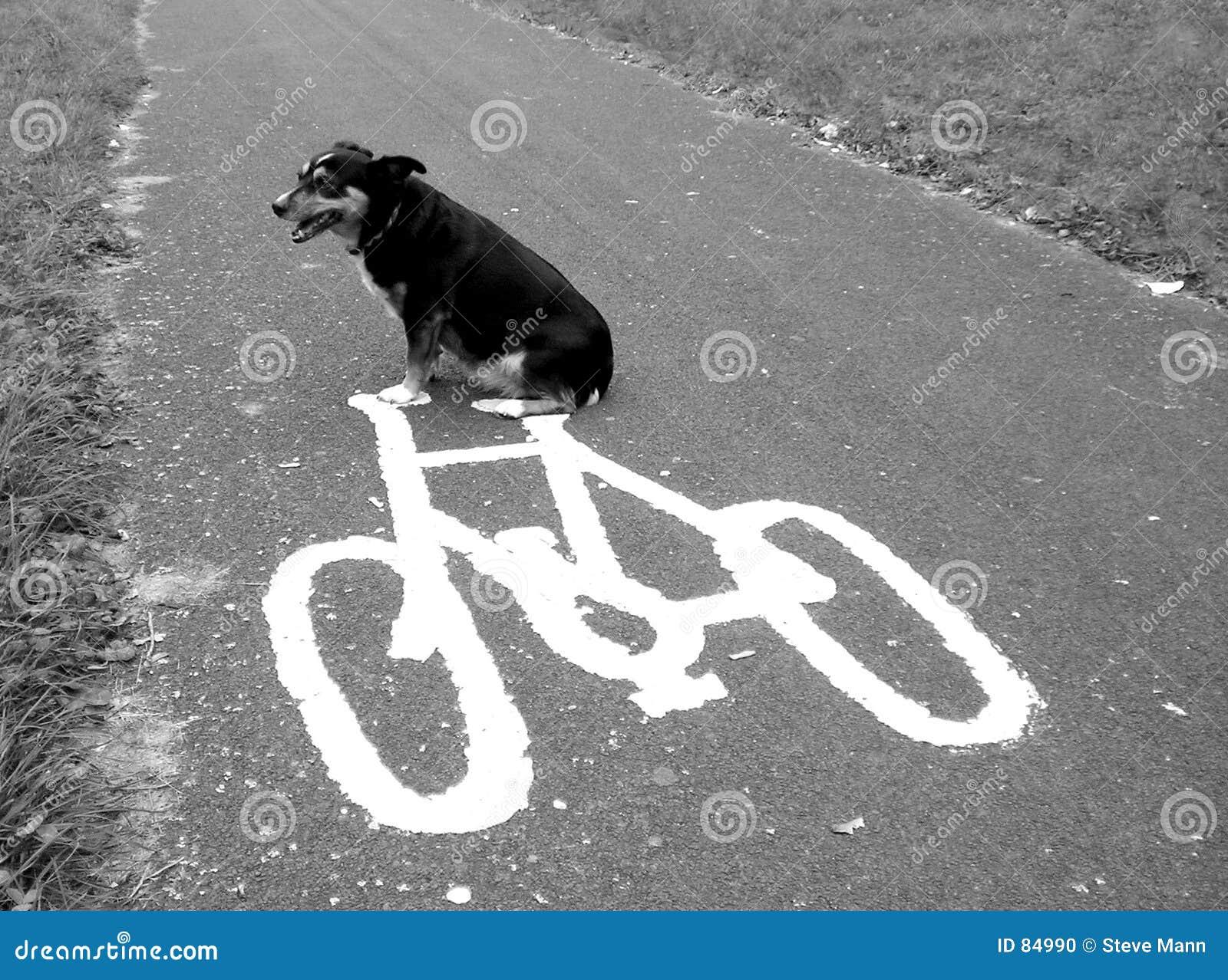 Hond op een fiets