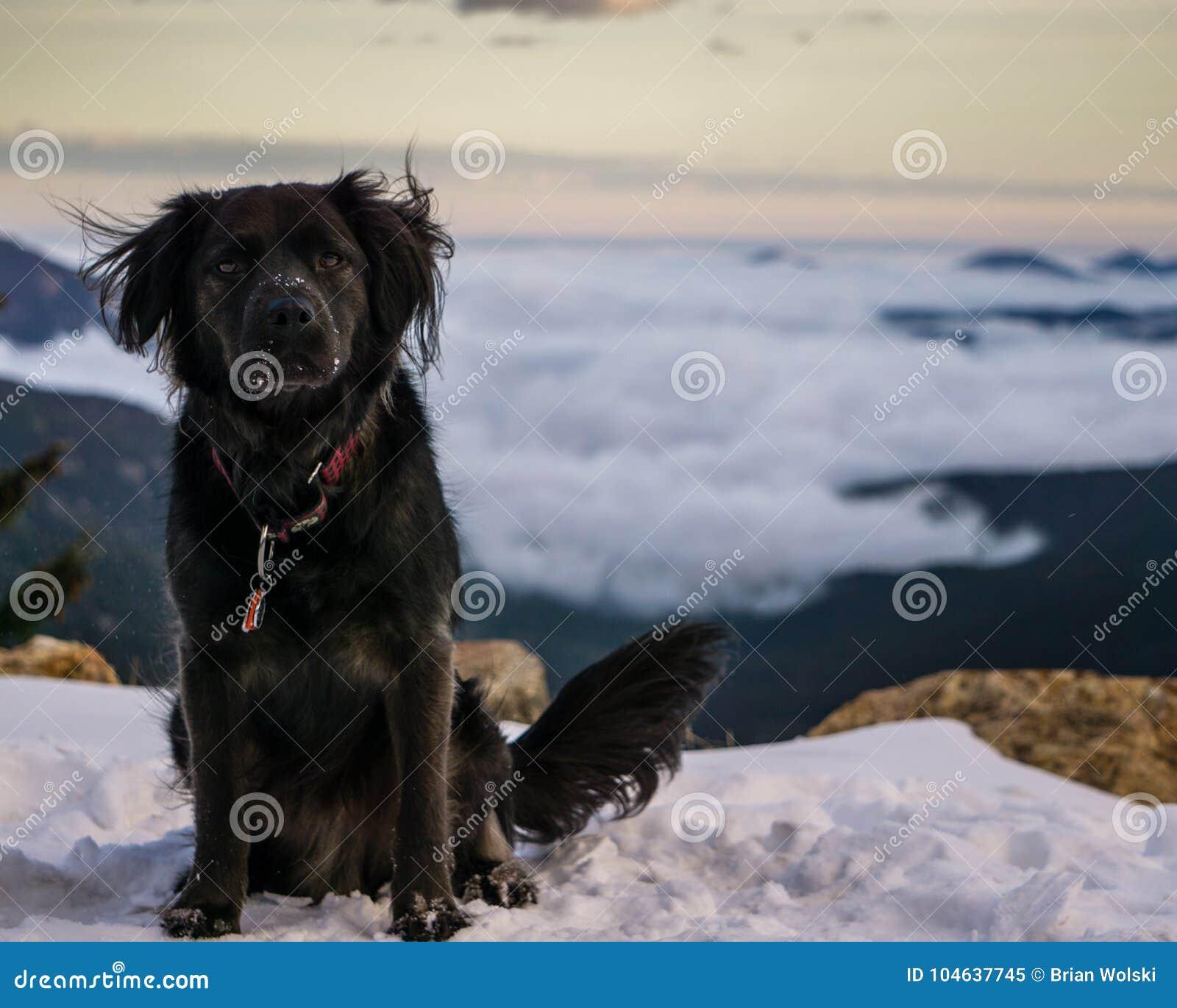 Download Hond op een Sneeuwstijging stock afbeelding. Afbeelding bestaande uit puppy - 104637745