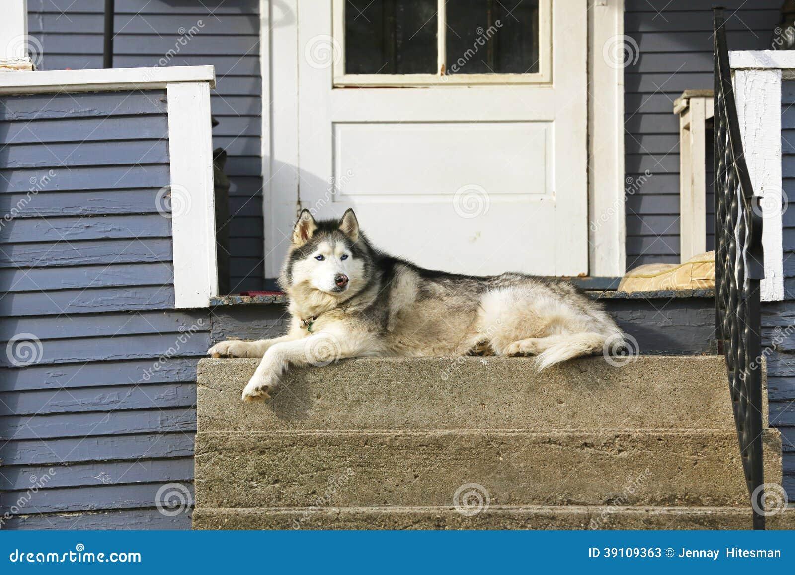 Hond op portiek