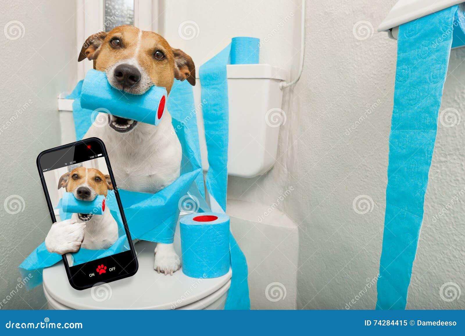 Hond op toiletzetel