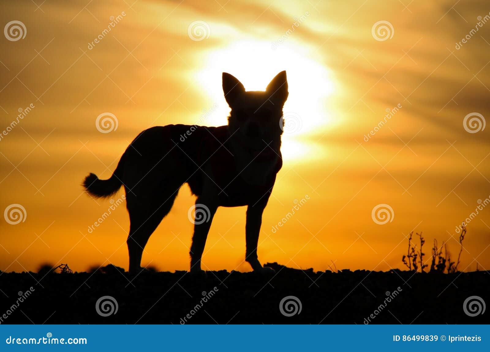 Hond` s Silhouet