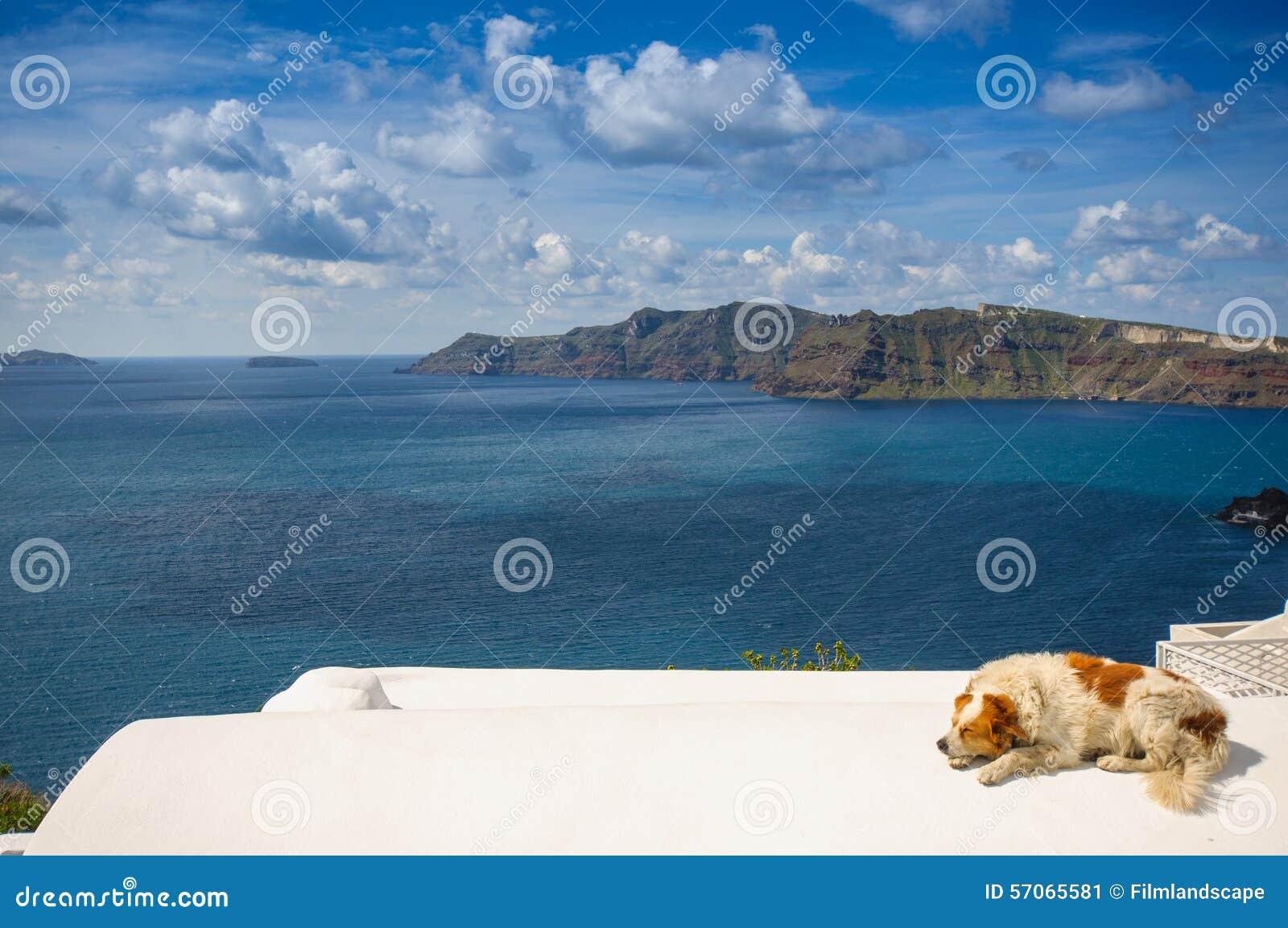 Hond in Santorini