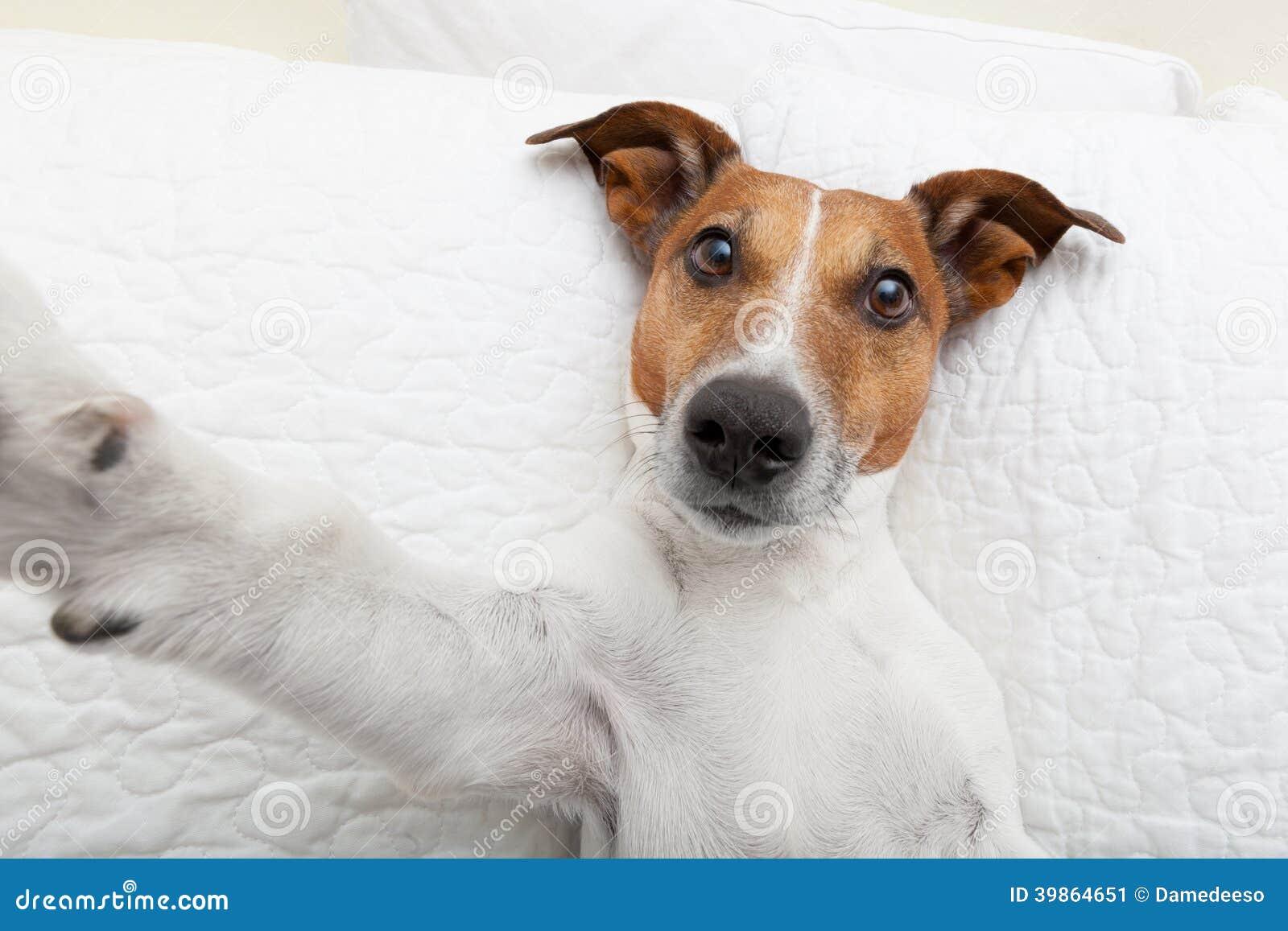 Hond selfie