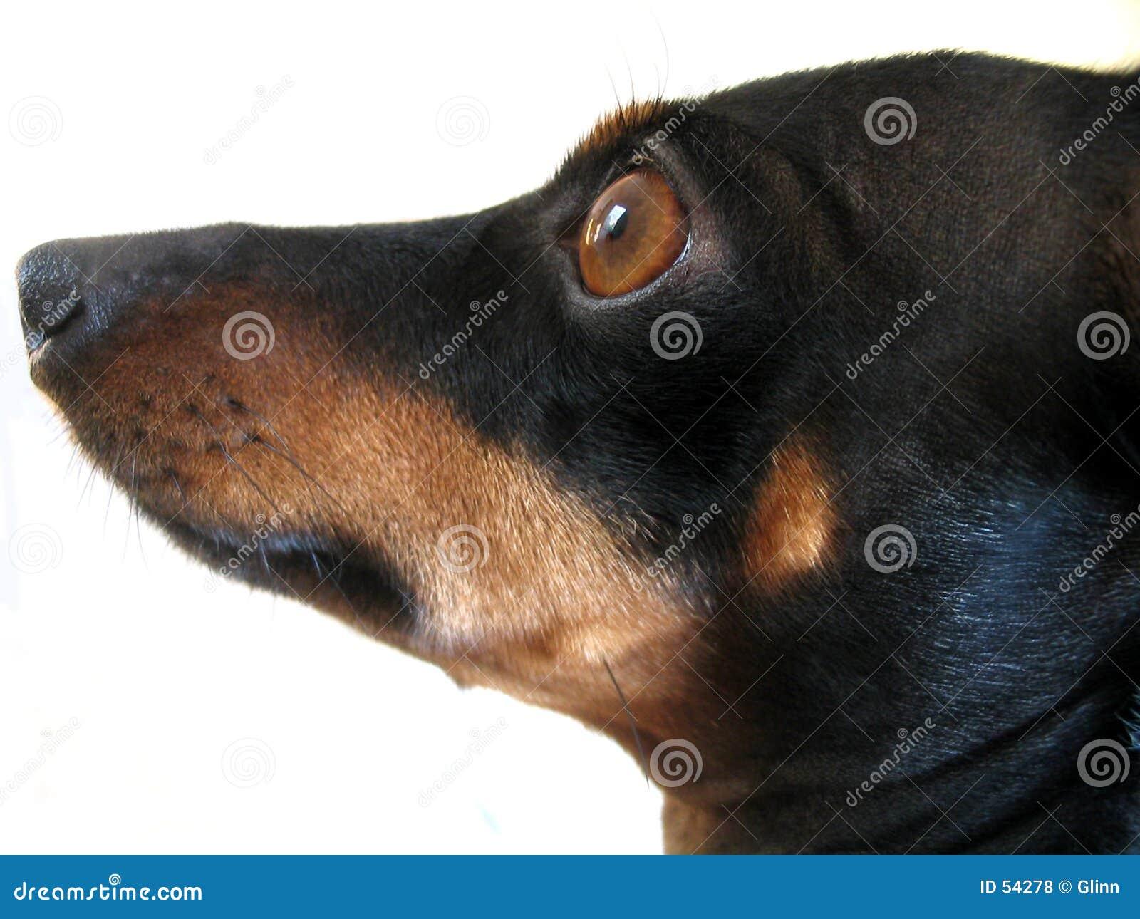 Hond, wat a
