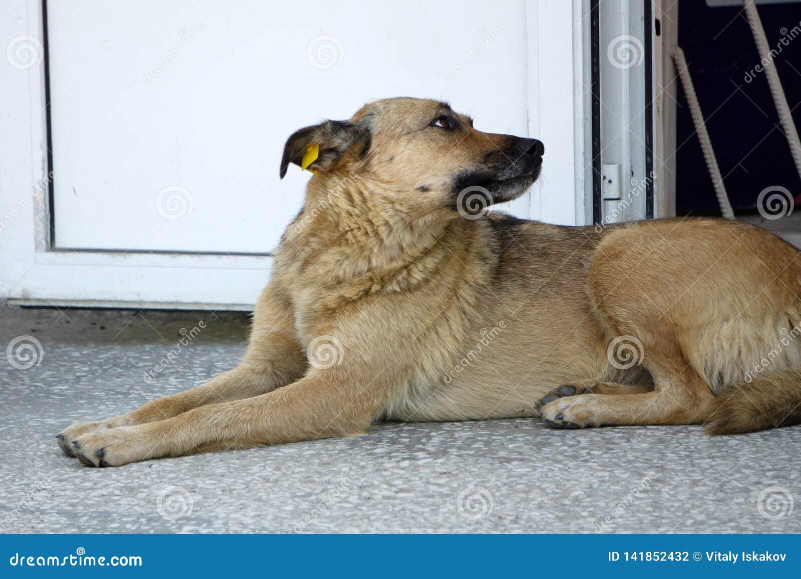 Hond welkom huis op bruin mat grappig huis