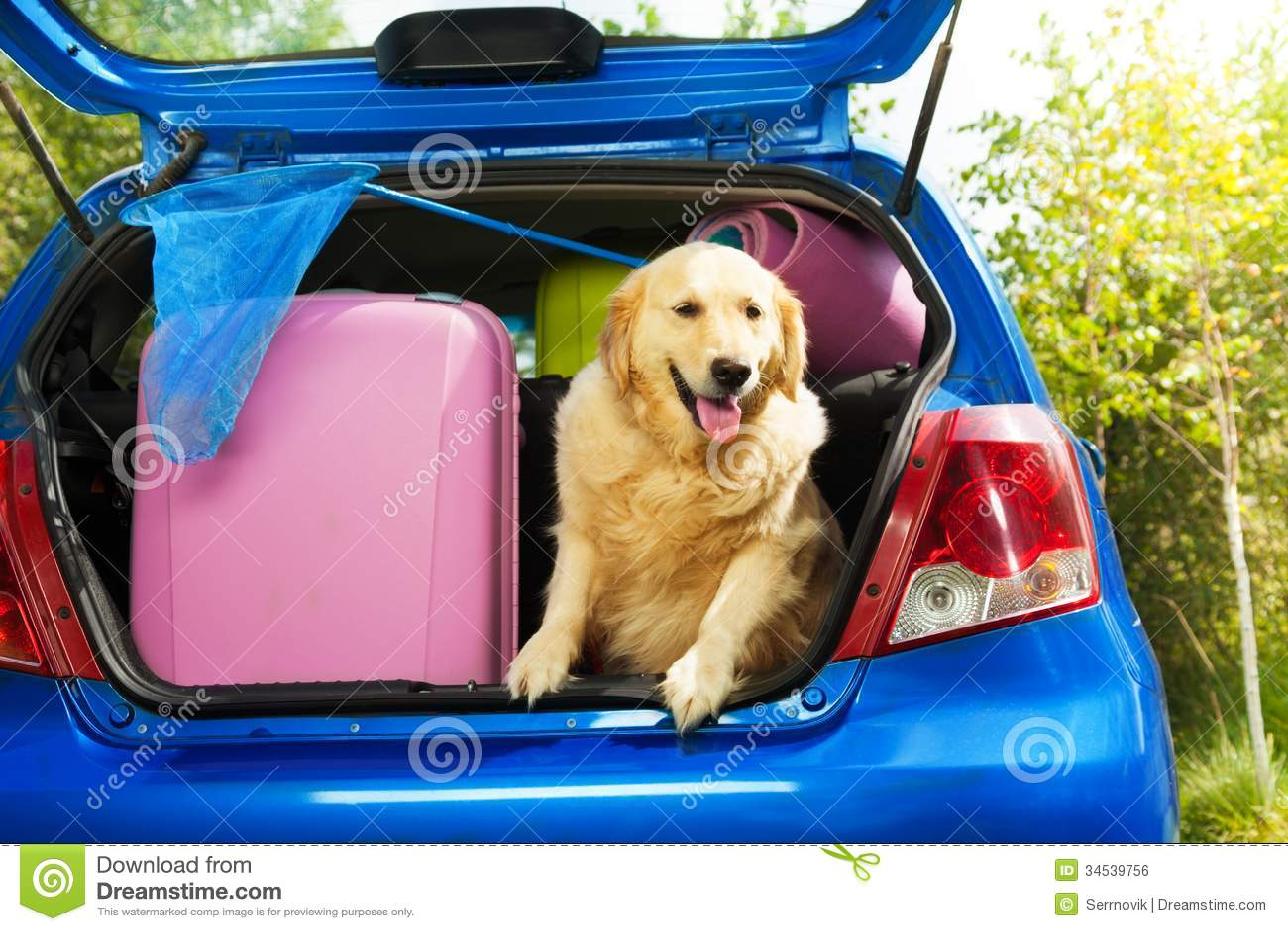 Honden en bagage om op reis te gaan