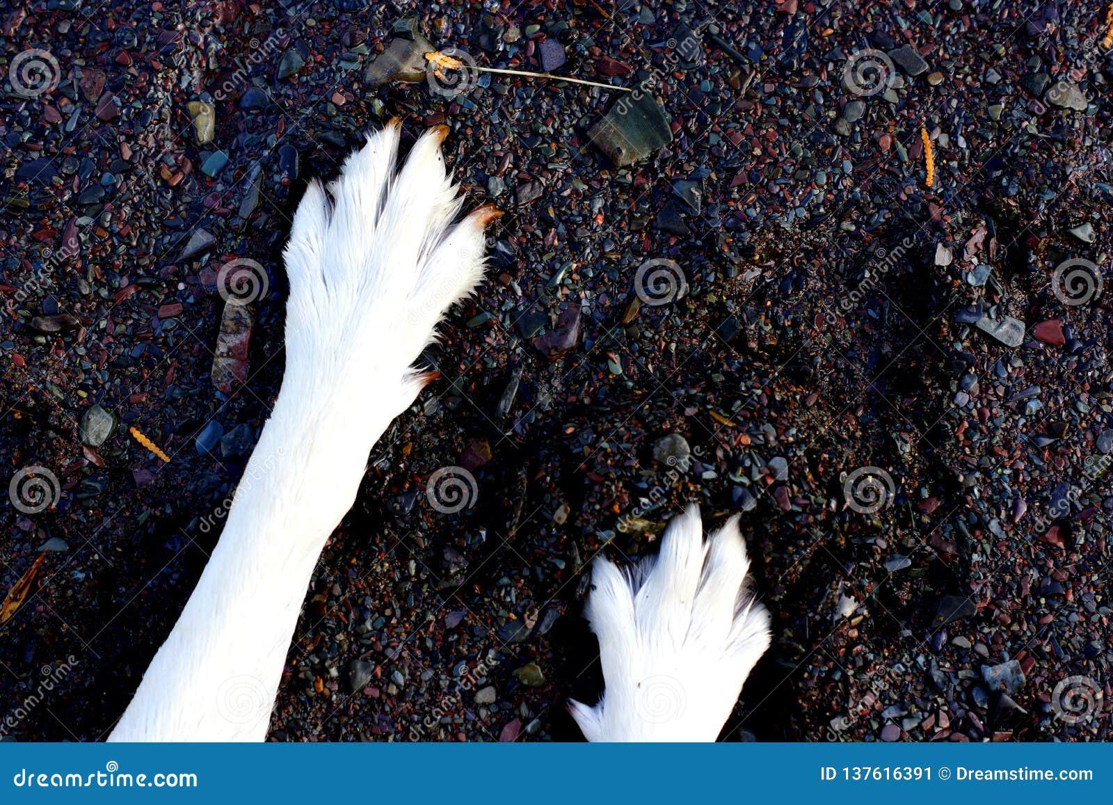 Hondpoten in het zand en de kiezelstenen