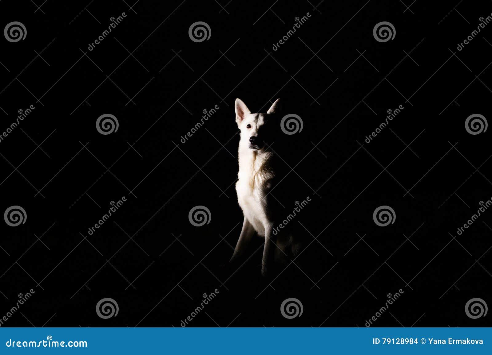 Hondsilhouet bij nacht