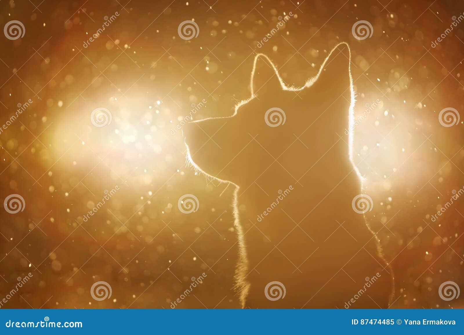 Hondsilhouet in de koplampen