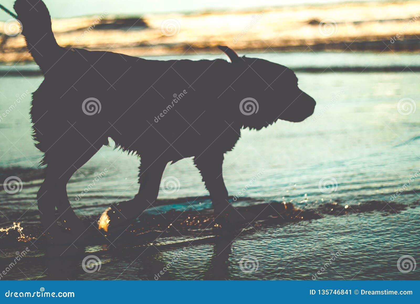 Hondsilhouet op water bij het strand