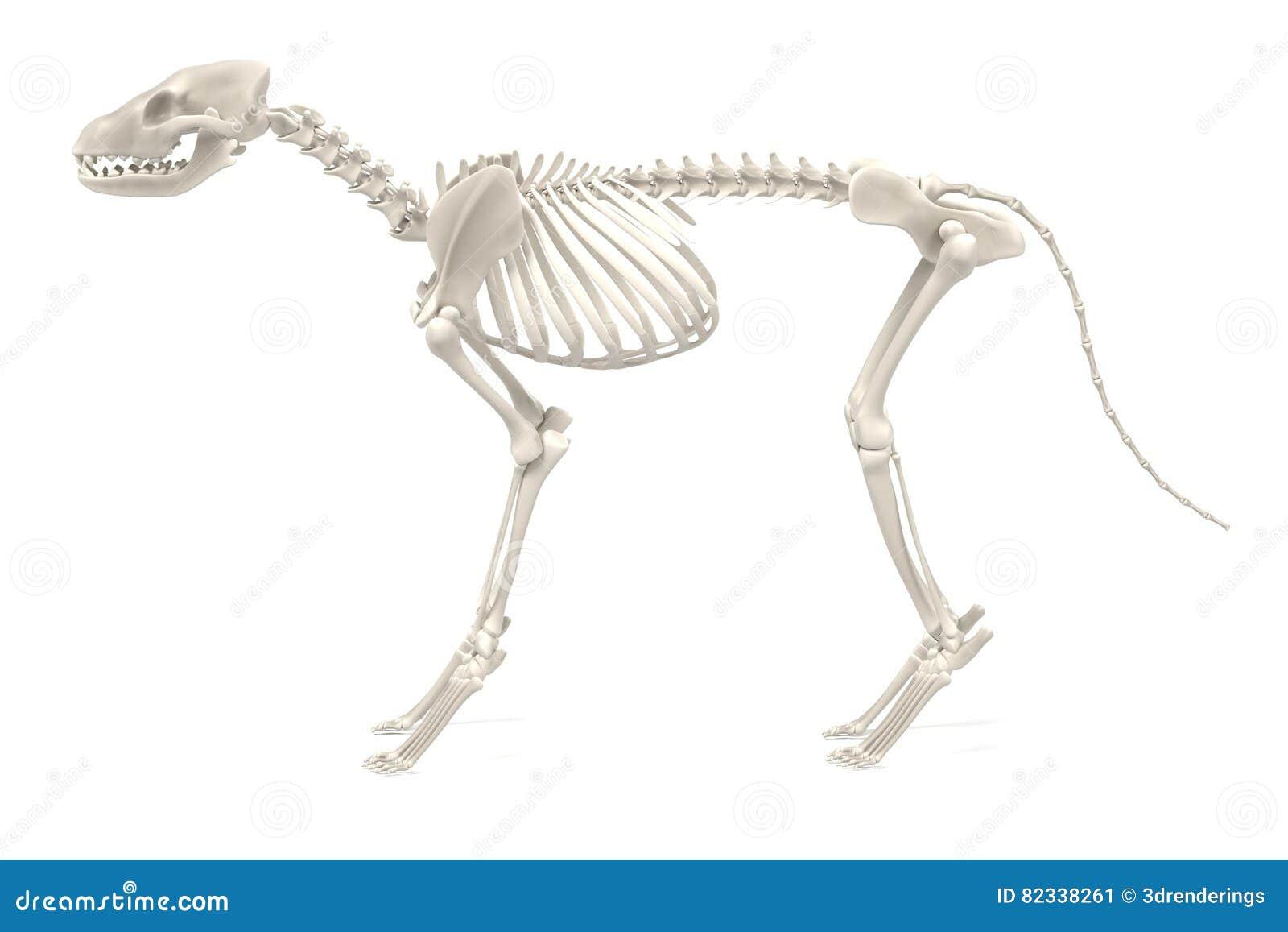 Hondskelet