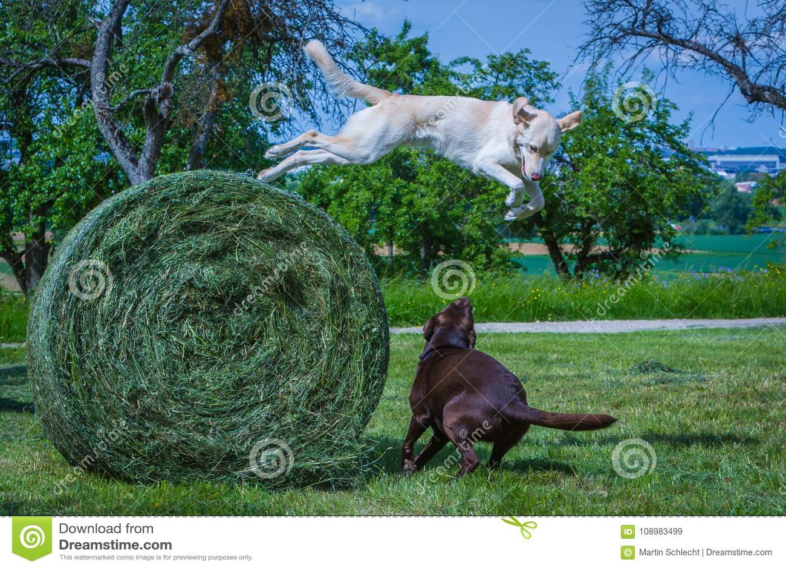 Hondsprongen van een lange hey bal