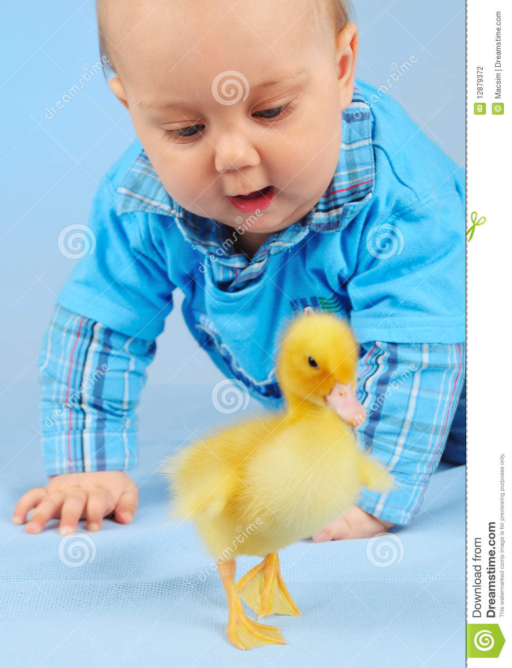 Honey baby and duck