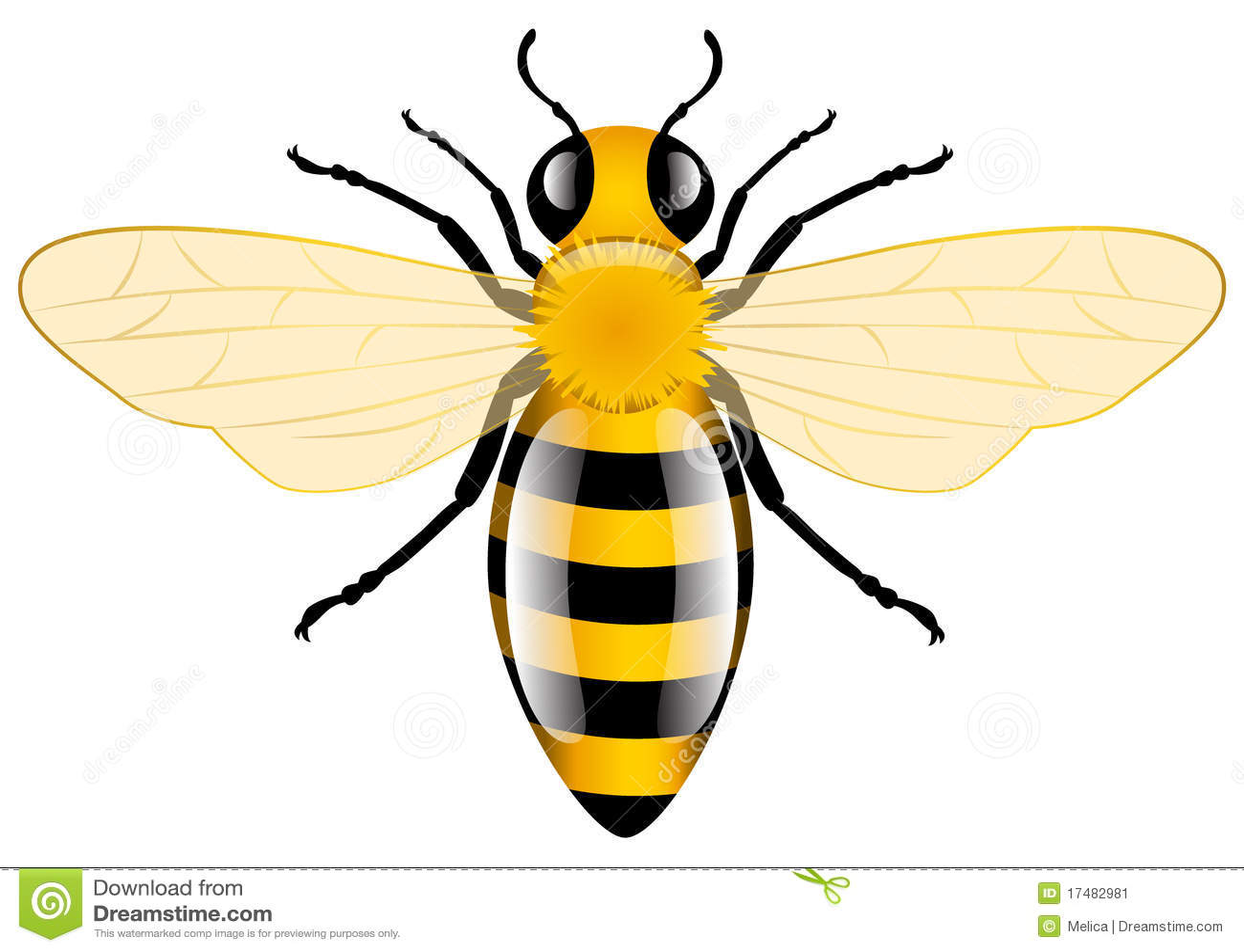 honey bee stock image image 17482981 honey bee clip art black and white honey bee clip art images free