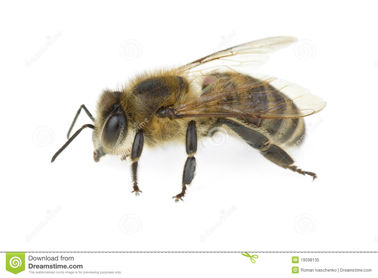 23+ Honey Bee Free Stock Images Wallpapers
