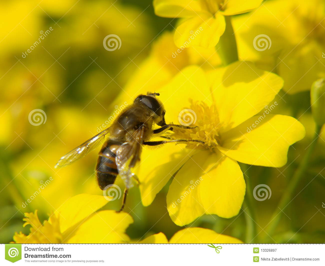 the issues of pollination by the honeybees in the united states And the internalization of reciprocal benefits those for honey bees in the united states and the policy issues surrounding pollination agriculture have.