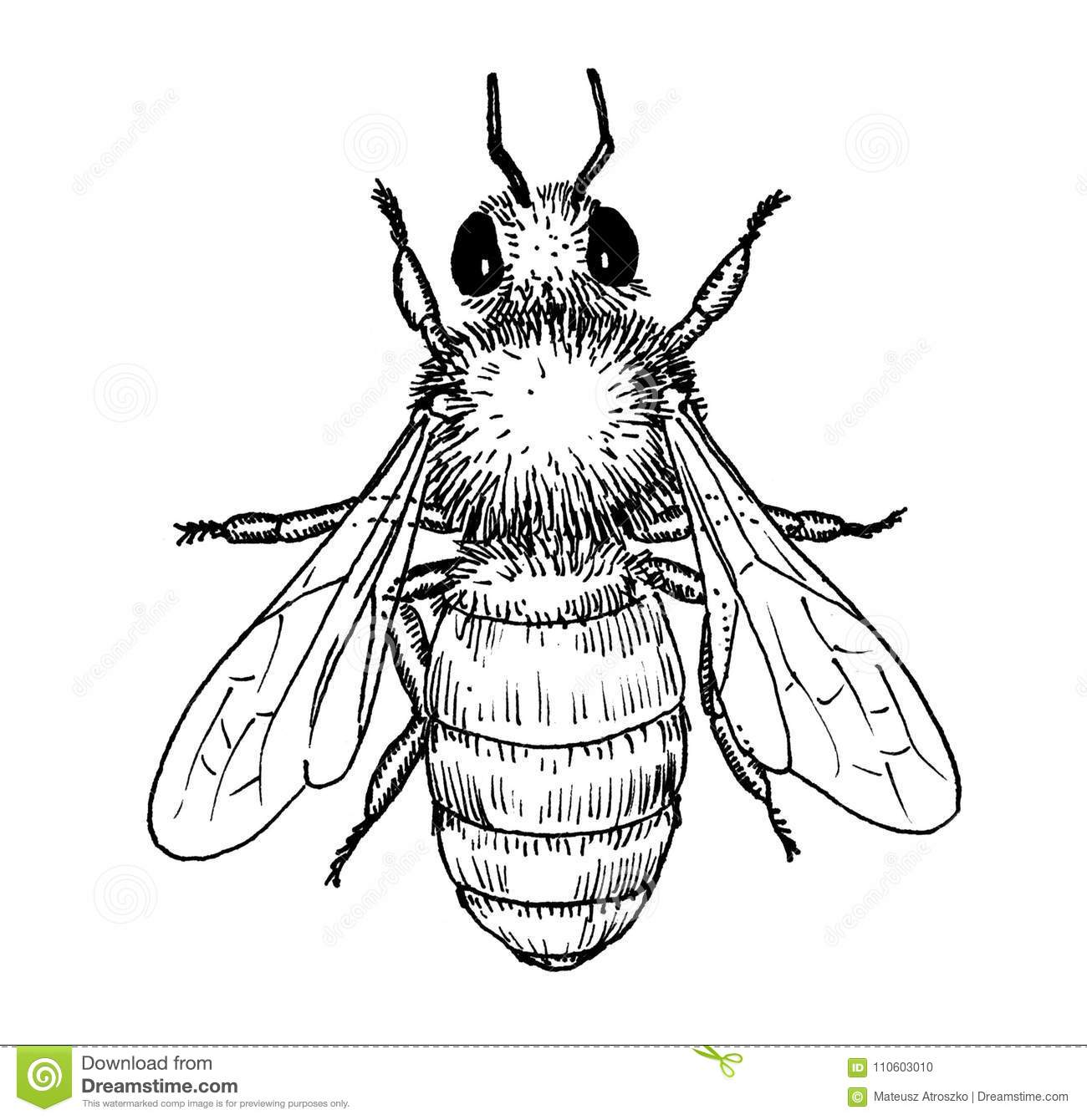 Honey Bee Insect Hand Draw Illustration Stock Illustration
