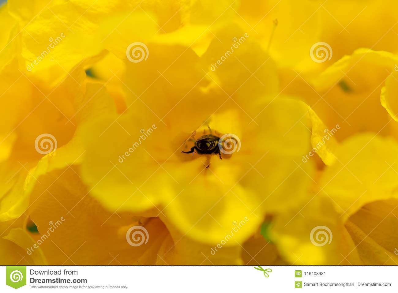 Honey bee with yellow flowers.