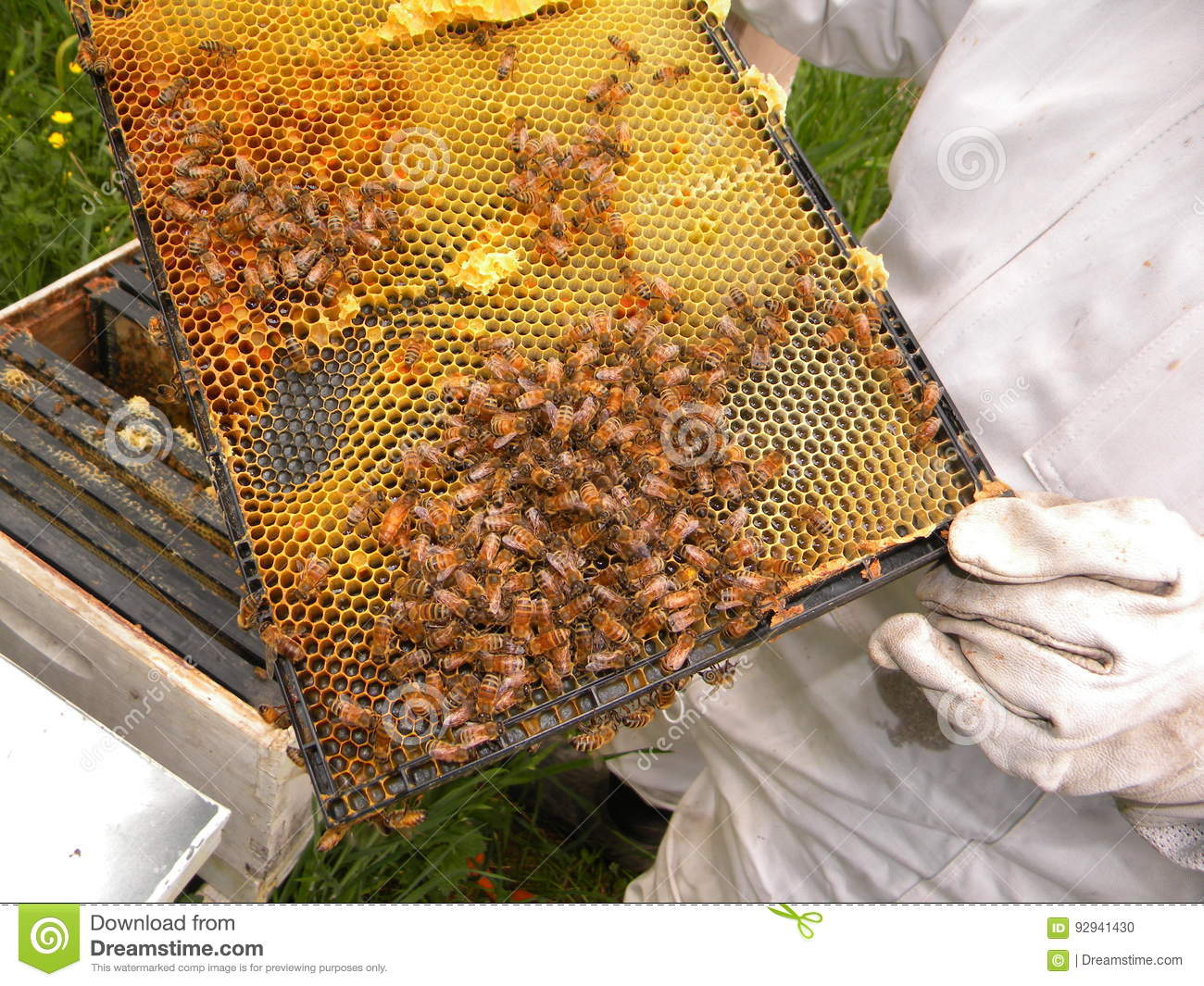 Honey Bees en Koningin