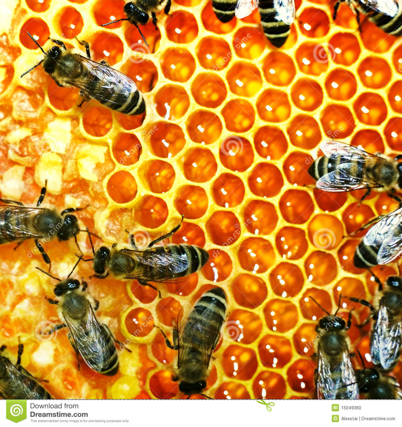 Honey bees on the hive