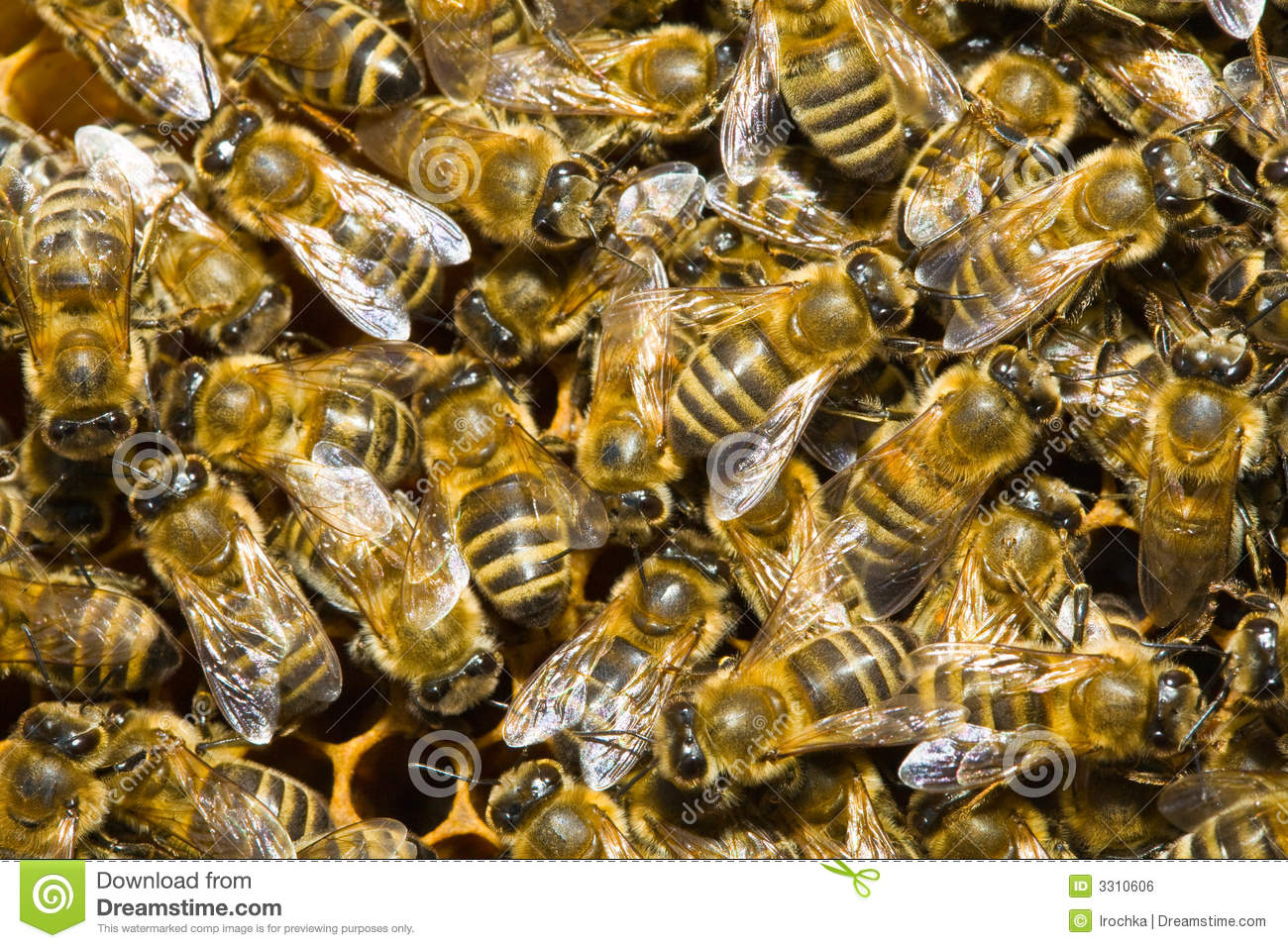 Download Honey bees in hive stock photo. Image of background, yellow - 3310606