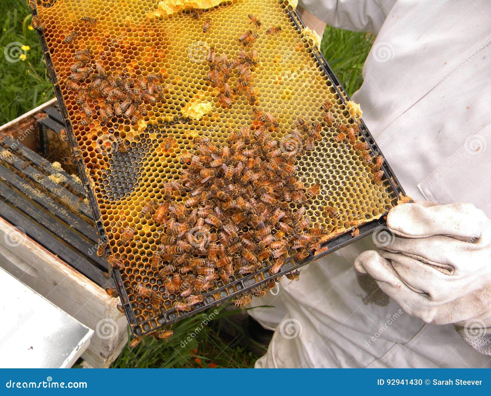 Honey Bees och drottning