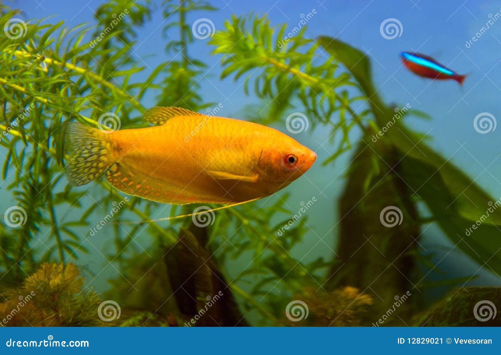 Fische & Aquarien Honig Aquarium