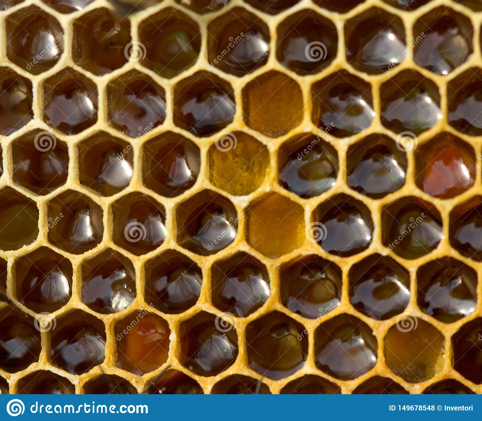 Honey, which the bees have learned from the nectar collected from the flowers
