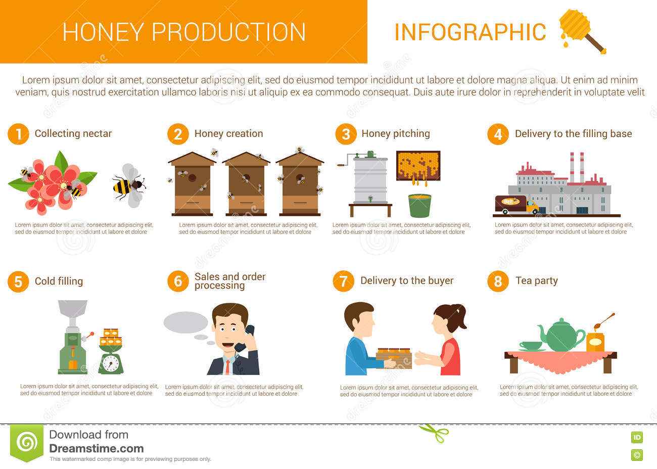 Honey production process stages or steps in infographic form. Bees or ...