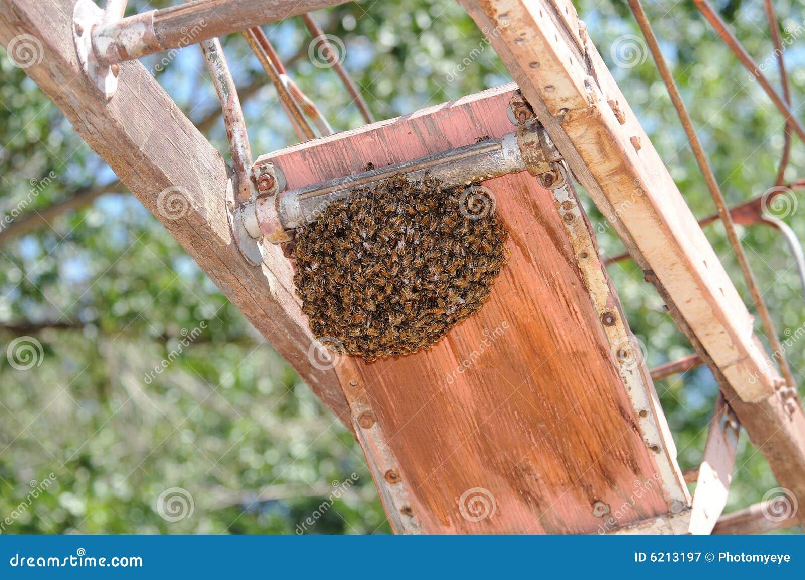 Honey roje pszczół