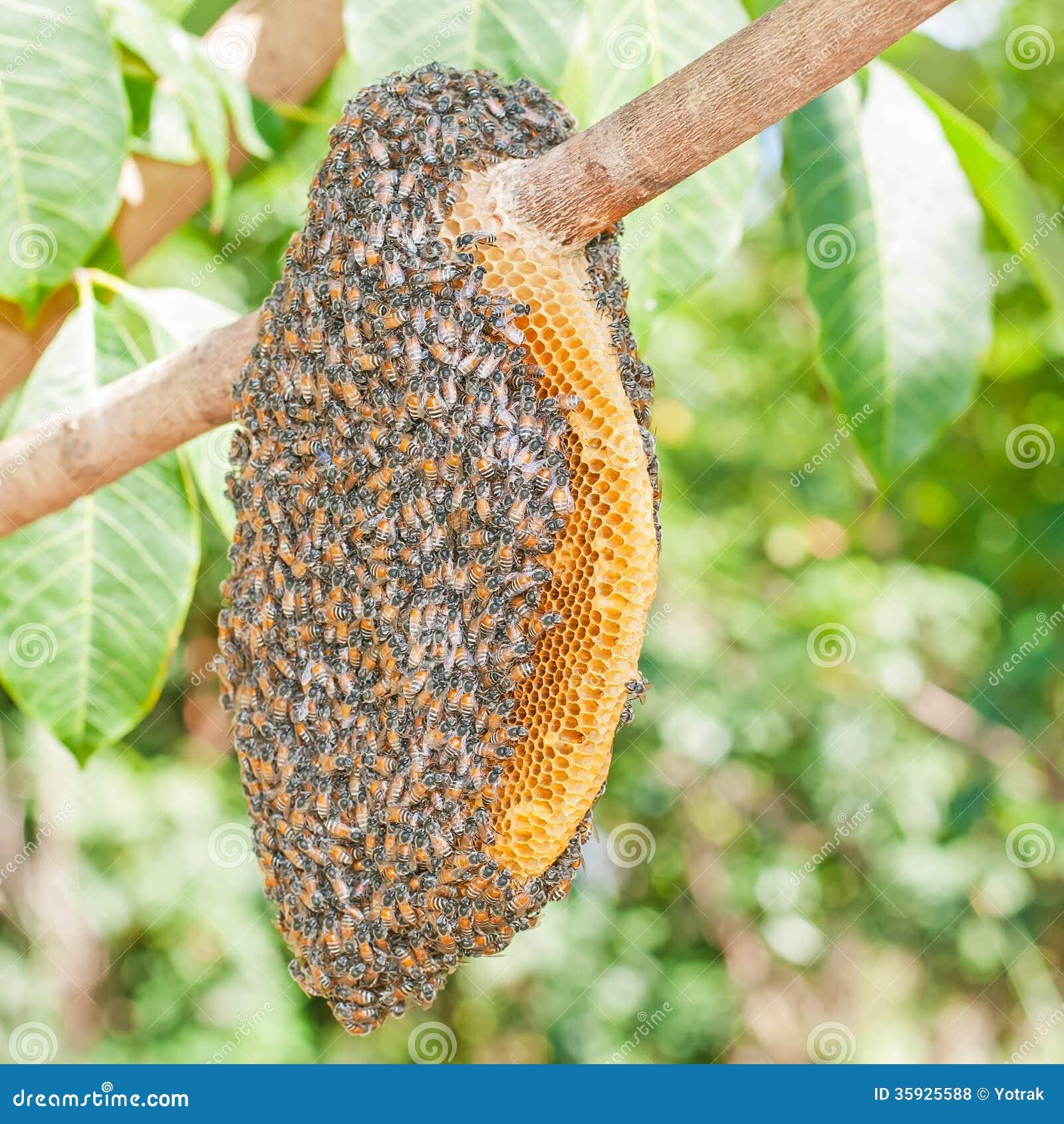 Honeybee Swarm Royalty Free Stock Photos - Image: 35925588