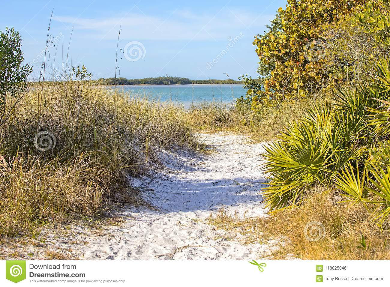 Honeymoon Island Secluded Beach Access Trail Stock Photo Image Of