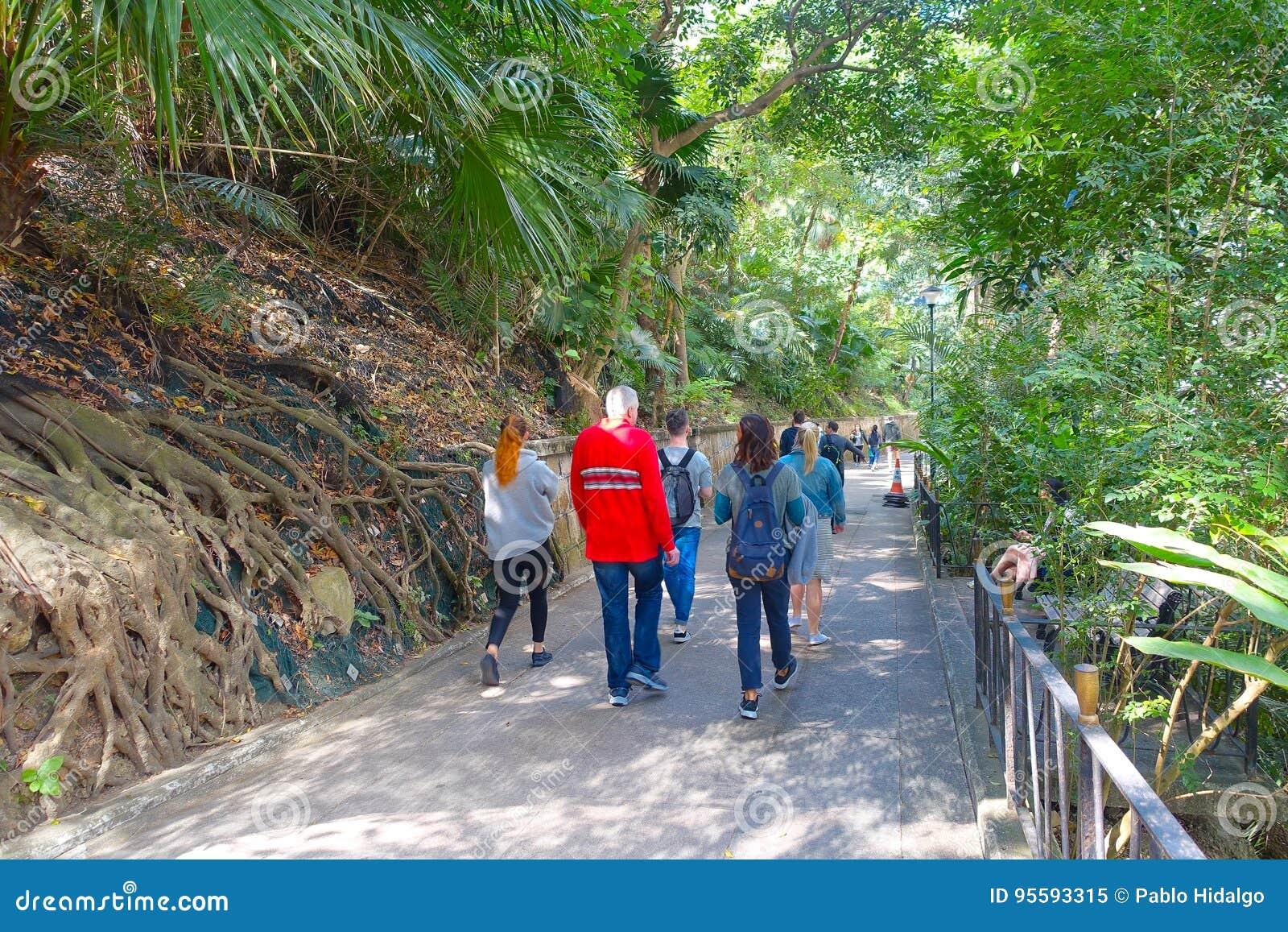 HONG KONG, CHINA - 26. JANUAR 2017: Nicht identifizierte Leute, die innerhalb eines Parks im Wald von Hong Kong, China gehen