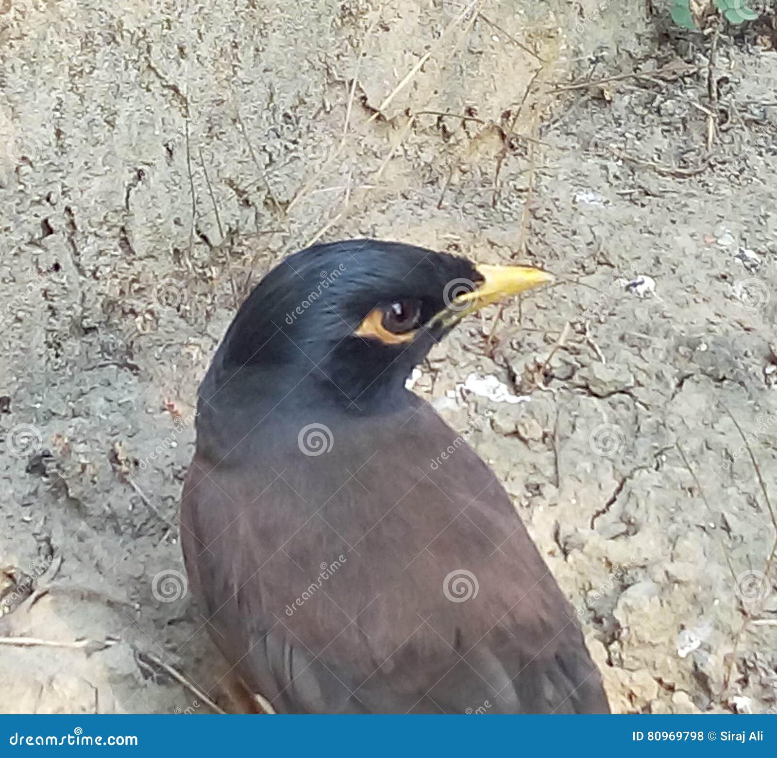 Hongerige vogel die voedsel zoeken