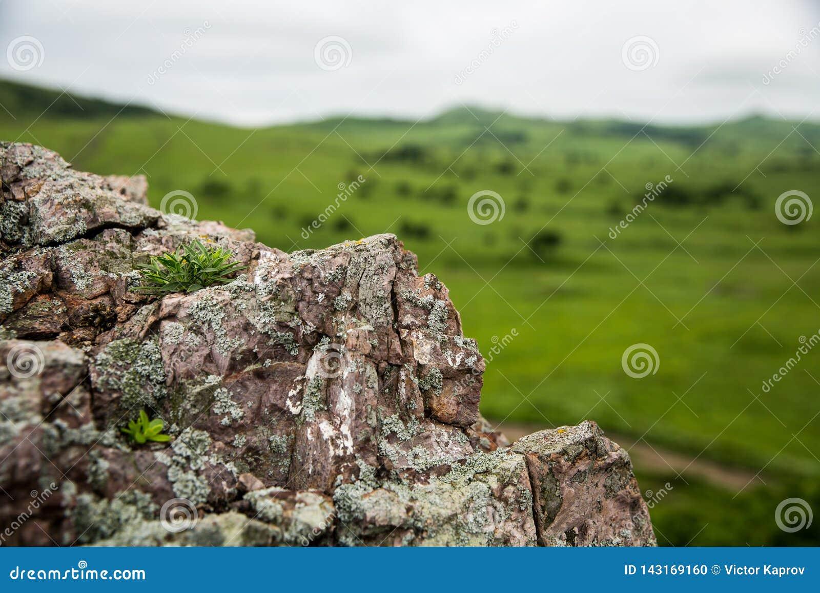 Hongo en la roca y el valle