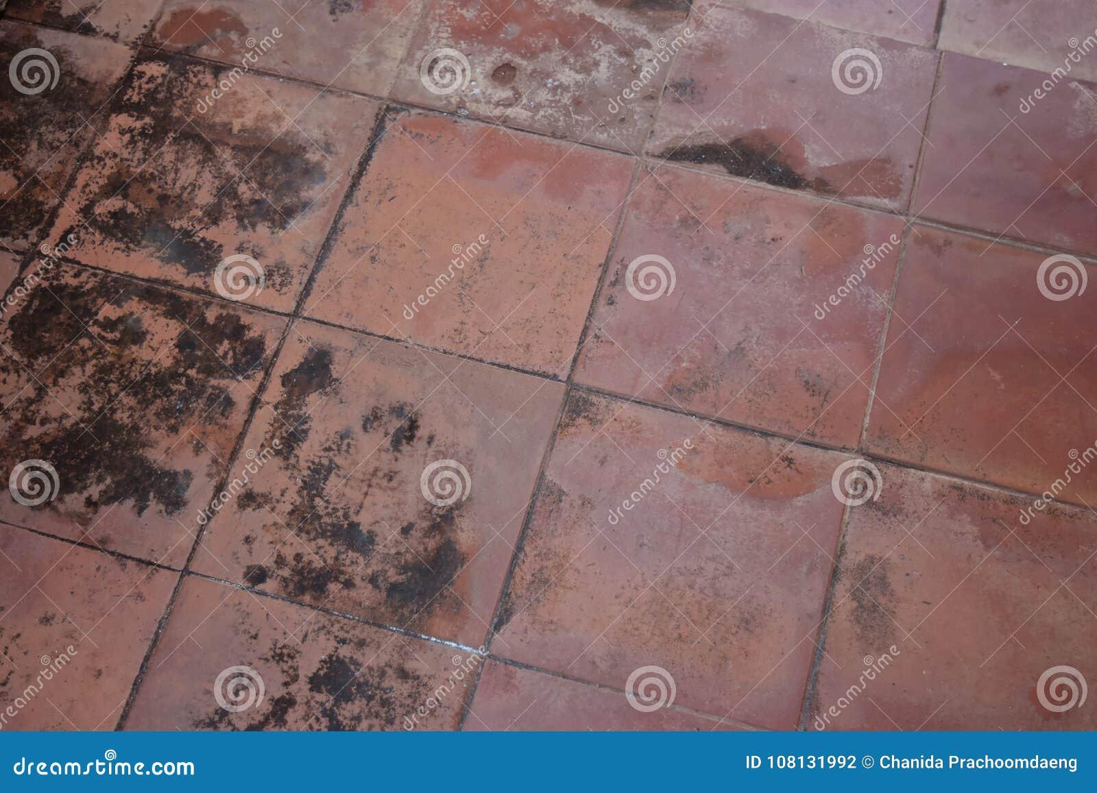 Hongo en suelo de baldosas fuera del edificio