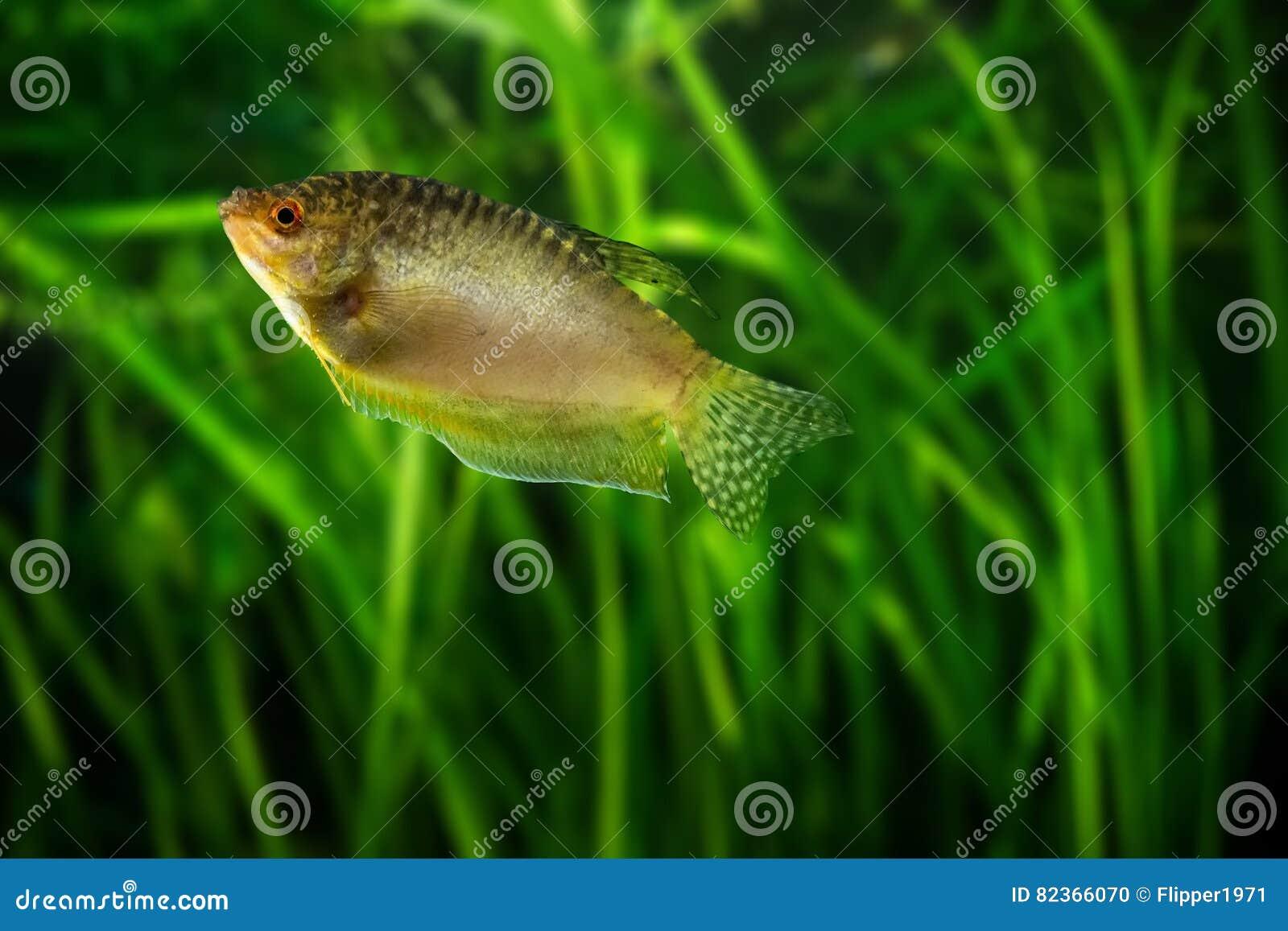 Haustierbedarf Honig Aquarium